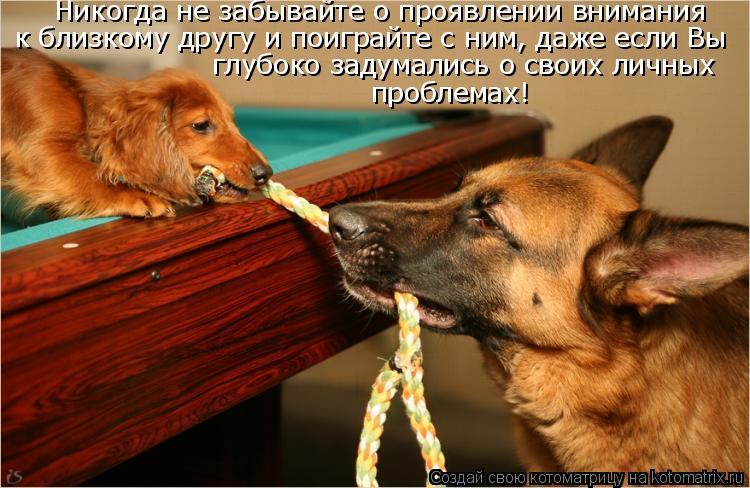 Котоматрица: Никогда не забывайте о проявлении внимания к близкому другу и поиграйте с ним, даже если Вы глубоко задумались о своих личных проблемах!
