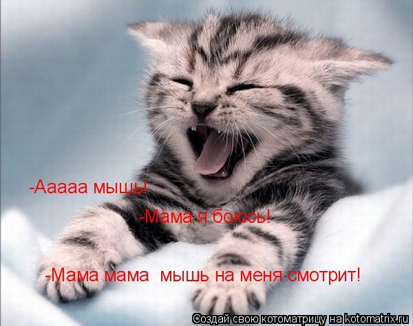 Котоматрица: -Ааааа мышь! -Мама я боюсь! -Мама мама  мышь на меня смотрит!