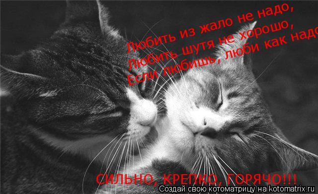 Котоматрица: Любить из жало не надо, Любить шутя не хорошо, Если любишь, люби как надо!! СИЛЬНО, КРЕПКО, ГОРЯЧО!!!