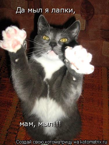 Котоматрица: Да мыл я лапки, мам, мыл!!!