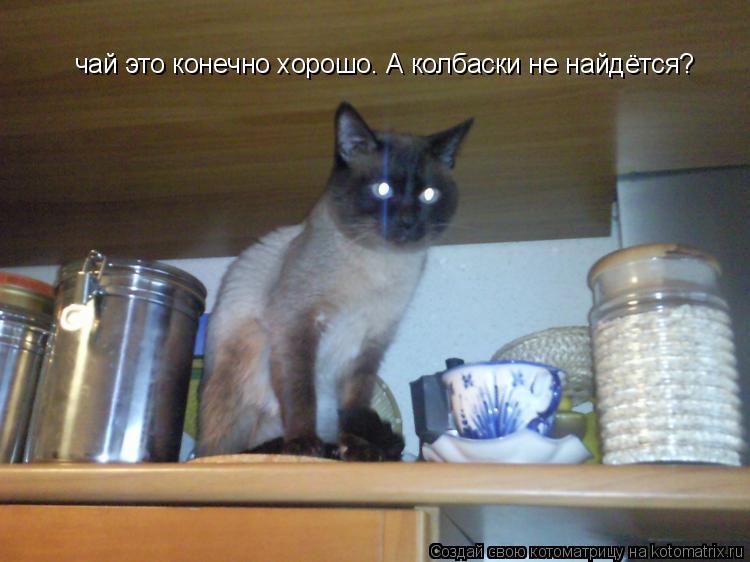 Котоматрица: чай это конечно хорошо. А колбаски не найдётся?