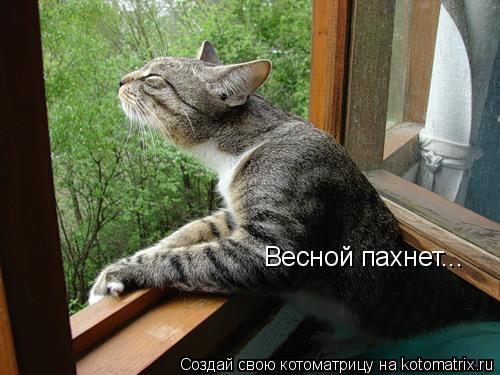 Котоматрица: Весной пахнет...