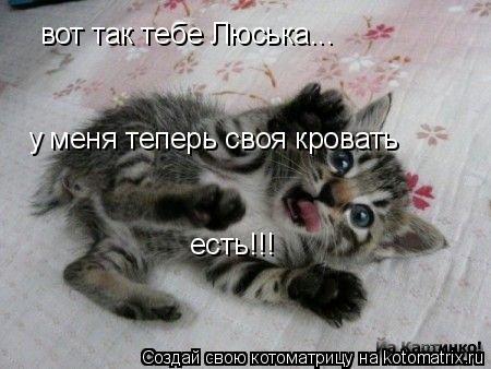 Котоматрица: вот так тебе Люська... у меня теперь своя кровать у меня теперь своя кровать есть!!!