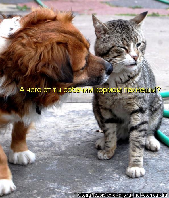 Котоматрица: А чего эт ты собачим кормом пахнешь!?