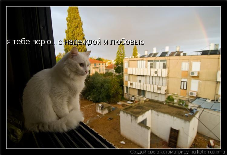 Котоматрица: я тебе верю...с надеждой и любовью