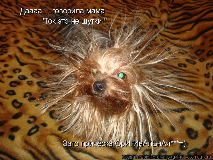 """Котоматрица: Даааа.....говорила мама  """"Ток это не шутки!"""" Зато причёска ОрИгИнАлЬнАя***=)"""