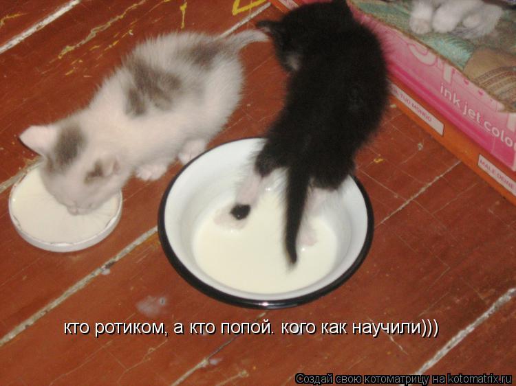 Котоматрица: кто ротиком, а кто попой. кого как научили)))