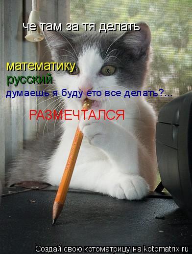 Котоматрица: че там за тя делать математику русский думаешь я буду ето все делать?... РАЗМЕЧТАЛСЯ