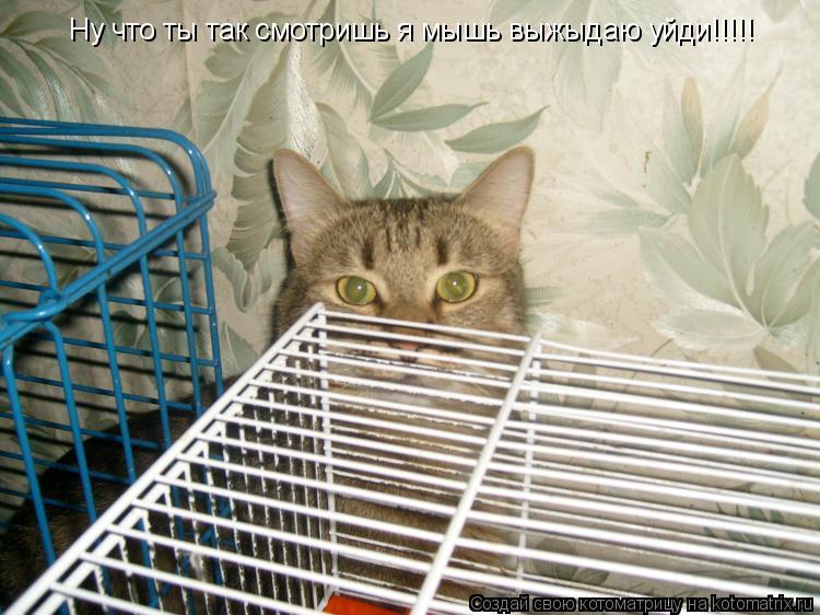 Котоматрица: Ну что ты так смотришь я мышь выжыдаю уйди!!!!!