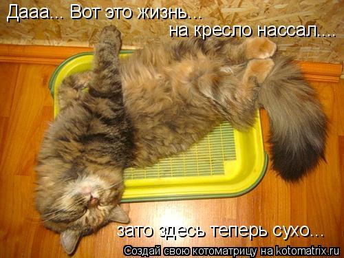 Котоматрица: Дааа... Вот это жизнь... на кресло нассал.... зато здесь теперь сухо...