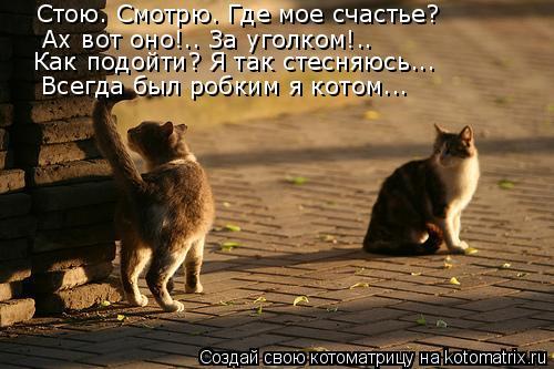 Котоматрица: Стою. Смотрю. Где мое счастье? Ах вот оно!.. За уголком!.. Как подойти? Я так стесняюсь... Всегда был робким я котом...
