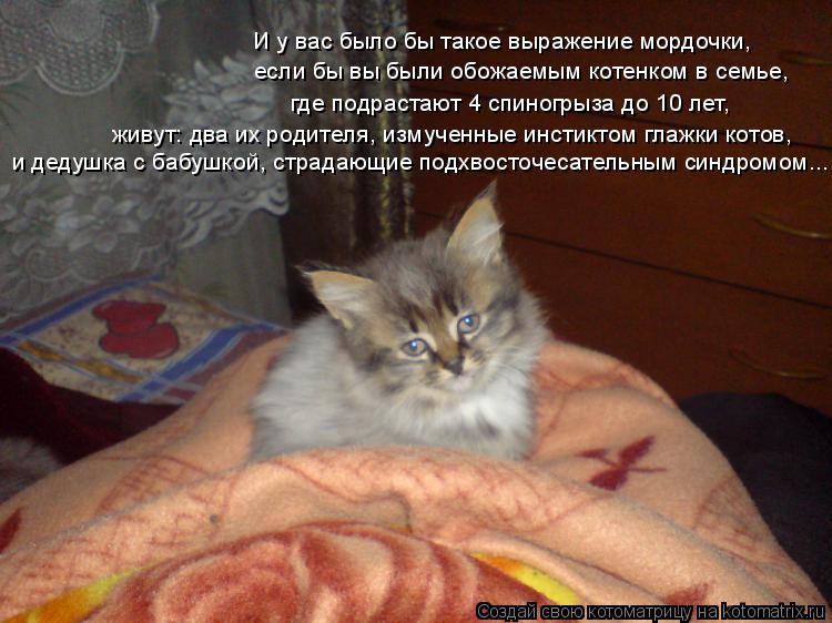 Котоматрица: И у вас было бы такое выражение мордочки, если бы вы были обожаемым котенком в семье, где подрастают 4 спиногрыза до 10 лет, живут: два их родит