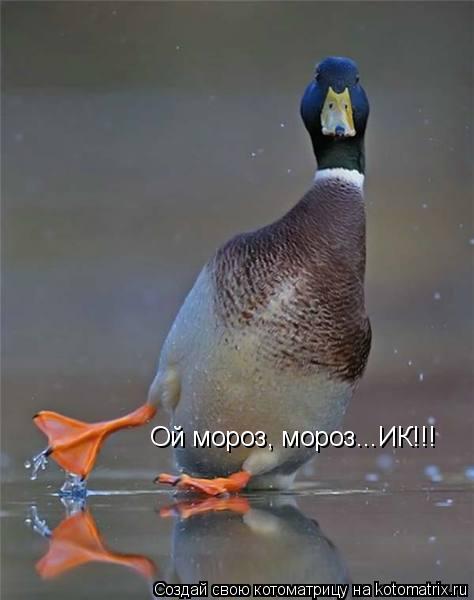 Котоматрица: Ой мороз, мороз...ИК!!!