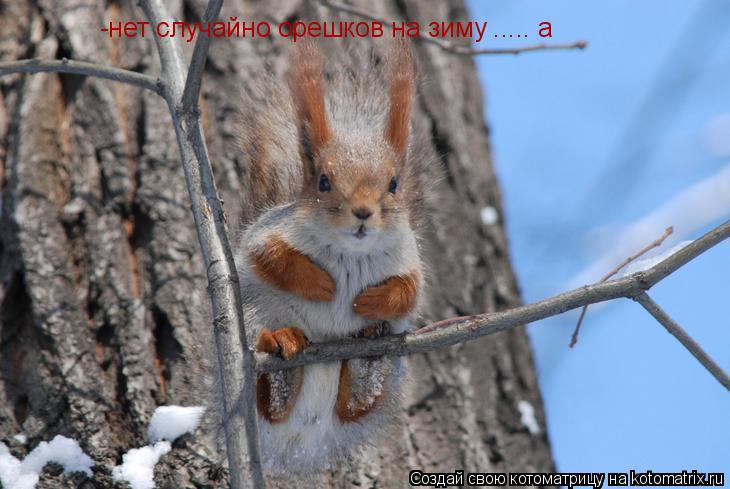 Котоматрица: -нет случайно орешков на зиму ..... а