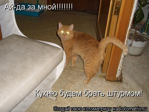 Котоматрица: Ай-да за мной!!!!!!! Кухню будем брать штурмом!