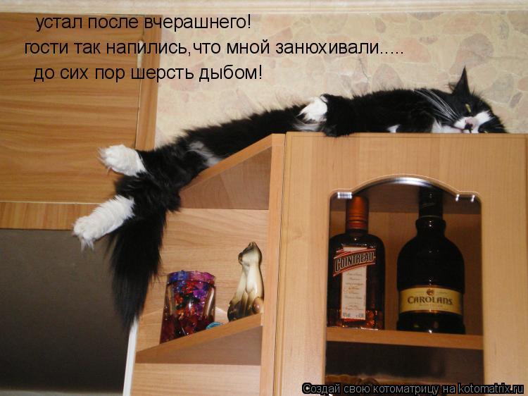 Котоматрица: устал после вчерашнего! гости так напились,что мной занюхивали..... до сих пор шерсть дыбом!