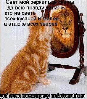 Котоматрица: Свет мой зеркальце скажы  да всю правду далажы кто на свете всех кусачей и милее  а атакже всех зверее