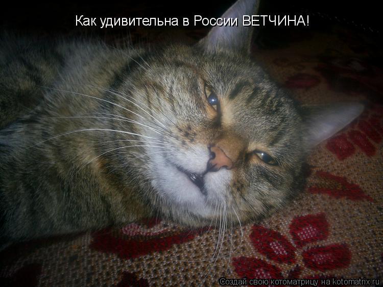 Котоматрица: Как удивительна в России ВЕТЧИНА!