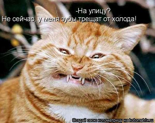 Котоматрица: -На улицу? Не сейчас, у меня зубы трещат от холода!