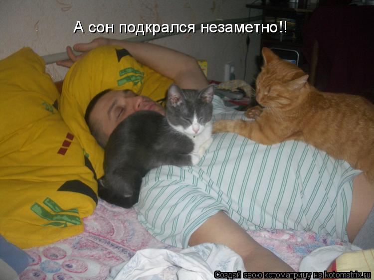 Котоматрица: А сон подкрался незаметно!!