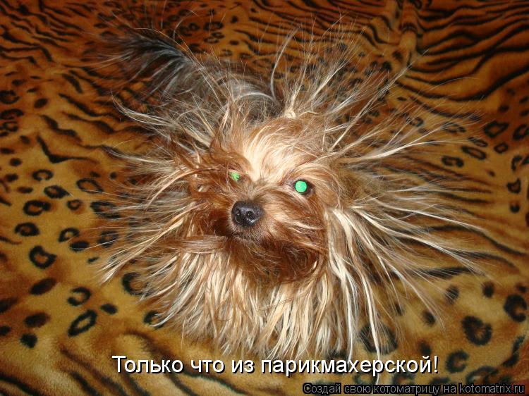 Котоматрица: Только что из парикмахерской!
