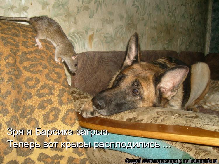 Котоматрица: Теперь вот крысы расплодились ... Зря я Барсика загрыз.