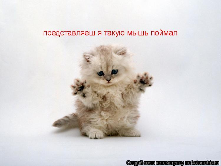 Котоматрица: представляеш я такую мышь поймал