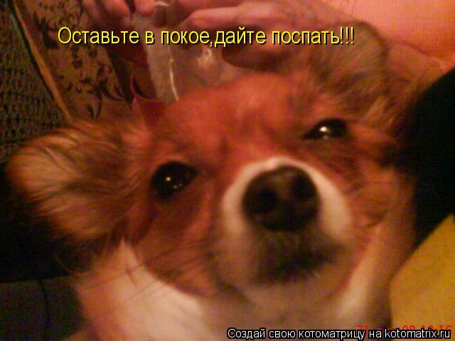 Котоматрица: Оставьте в покое,дайте поспать!!!