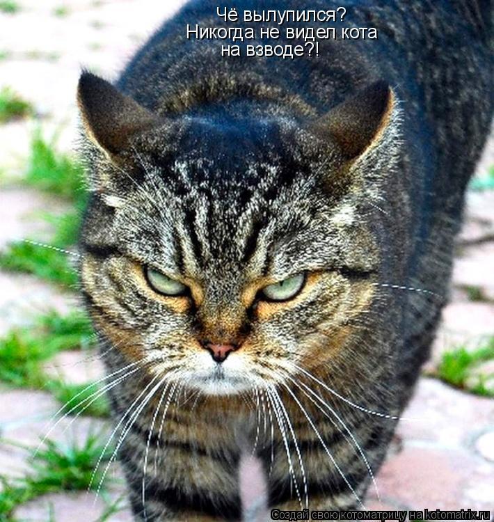 Котоматрица: Чё вылупился? Никогда не видел кота на взводе?!