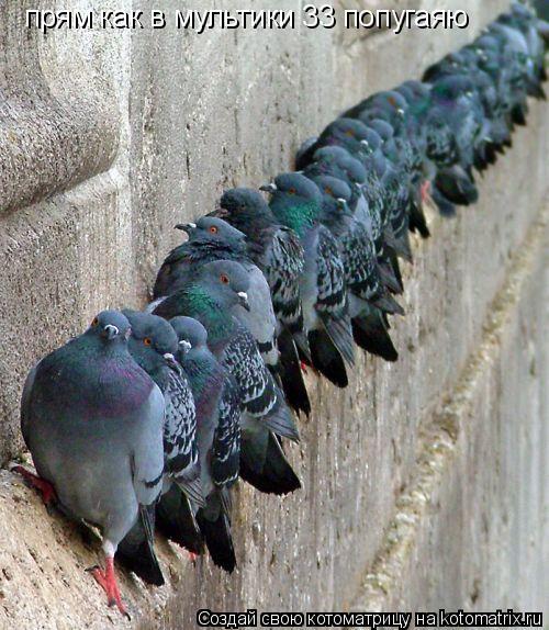 Котоматрица: прям как в мультики 33 попугаяю