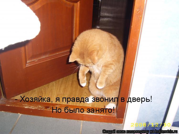 Котоматрица: - Хозяйка, я правда звонил в дверь! Но было занято!
