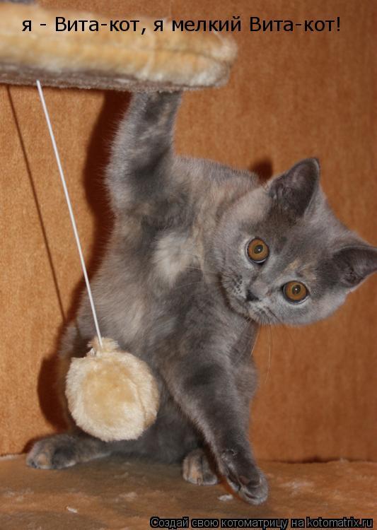 Котоматрица: я - Вита-кот, я мелкий Вита-кот!