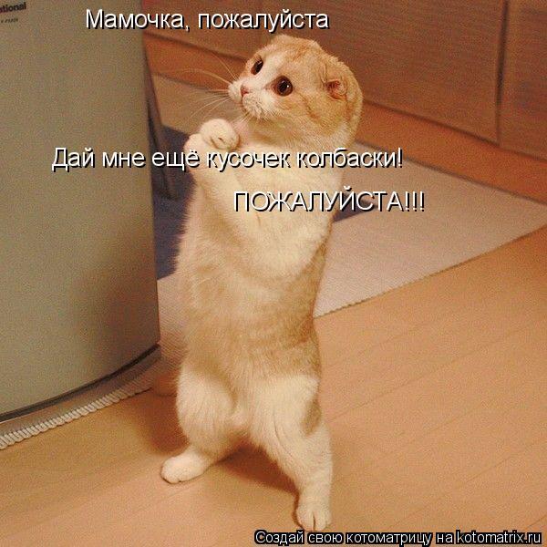 Котоматрица: Мамочка, пожалуйста  Дай мне ещё кусочек колбаски! ПОЖАЛУЙСТА!!!
