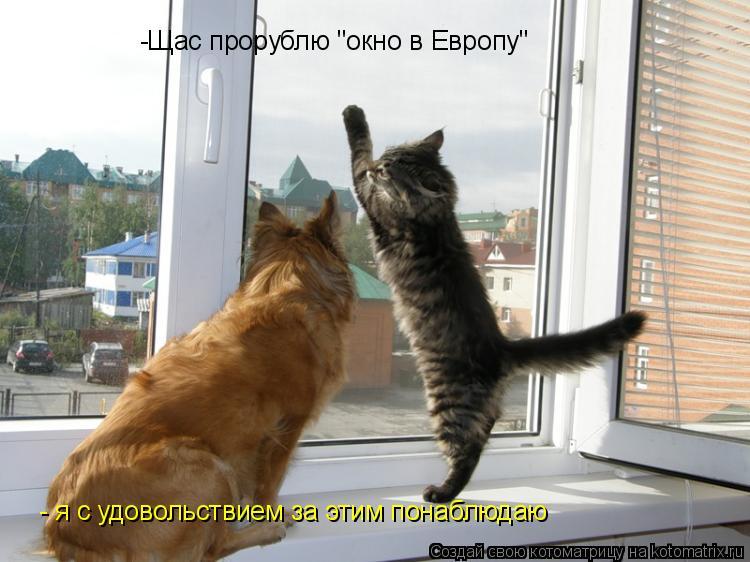 """Котоматрица: -Щас прорублю """"окно в Европу"""" - я с удовольствием за этим понаблюдаю"""