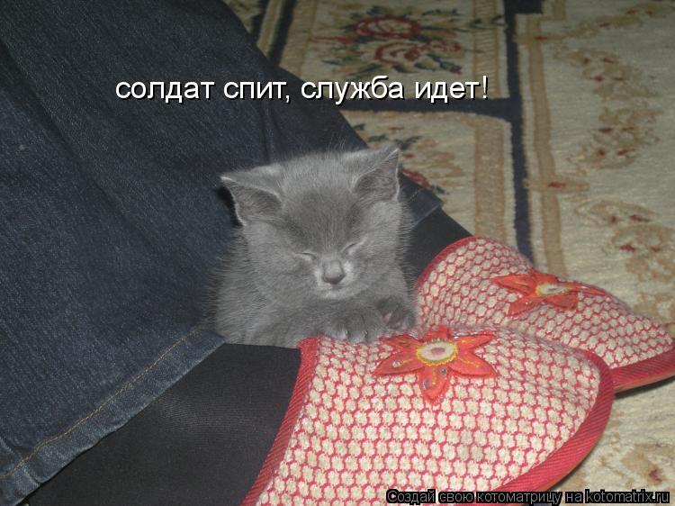 Котоматрица: солдат спит, служба идет!