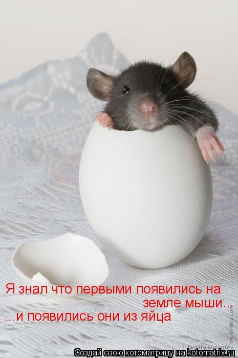 Котоматрица: Я знал что первыми появились на земле мыши ... ...и появились они из яйца