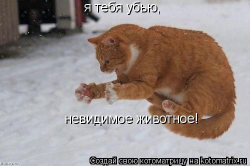 Котоматрица: я тебя убью, невидимое животное!