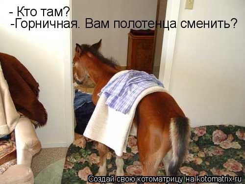 Котоматрица: - Кто там? -Горничная. Вам полотенца сменить?