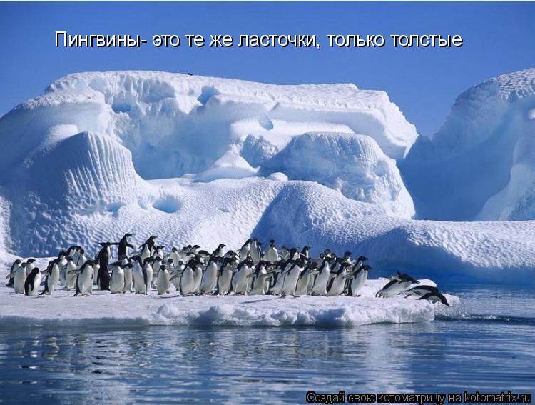 Котоматрица: Пингвины- это те же ласточки, только толстые