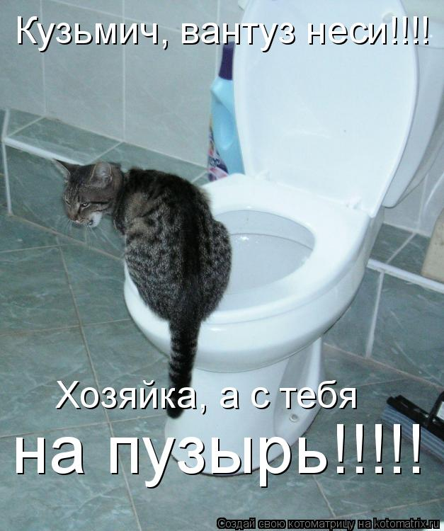 Котоматрица: Кузьмич, вантуз неси!!!! Хозяйка, а с тебя на пузырь!!!!!