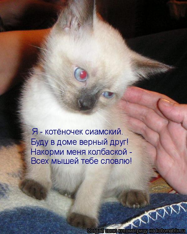 Котоматрица: Накорми меня колбаской - Всех мышей тебе словлю! Буду в доме верный друг! Я - котёночек сиамский.