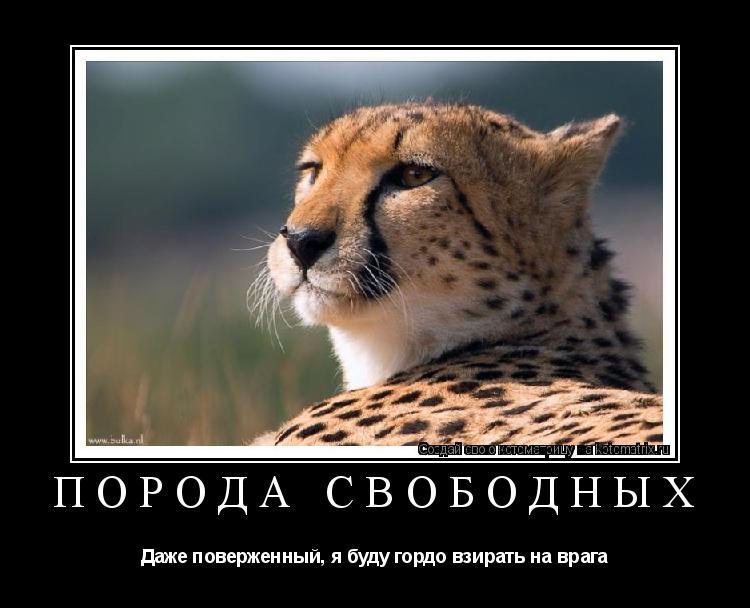 Котоматрица: порода свободных Даже поверженный, я буду гордо взирать на врага