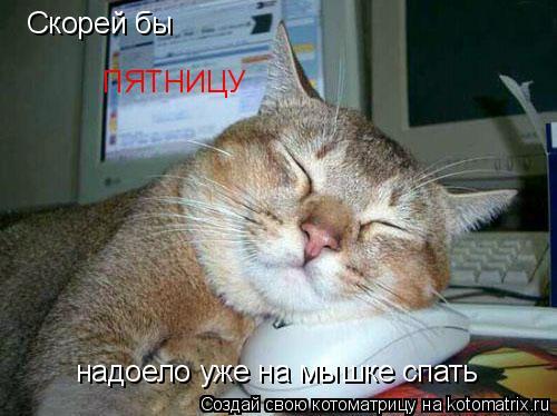 Котоматрица: Скорей бы  ПЯТНИЦУ надоело уже на мышке спать