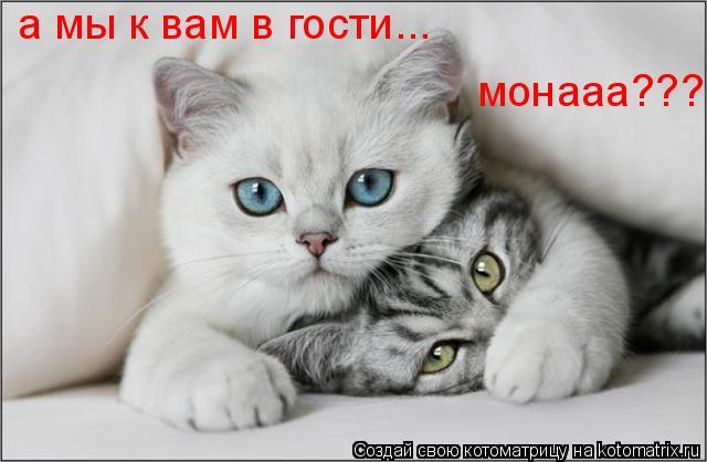 Котоматрица: а мы к вам в гости... монааа???