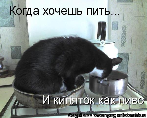 Котоматрица: Когда хочешь пить... И кипяток как пиво