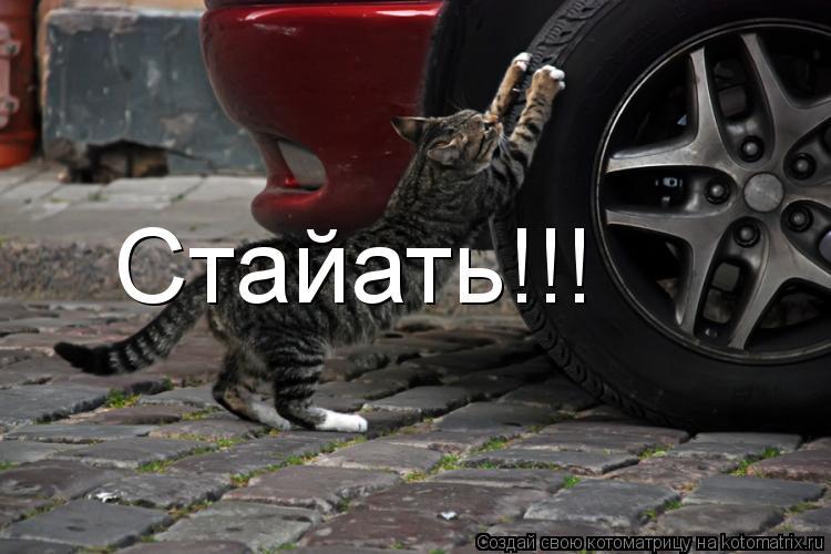 Котоматрица: Стайать!!!