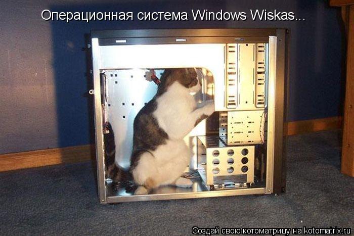 Котоматрица: Операционная система Windows Wiskas...