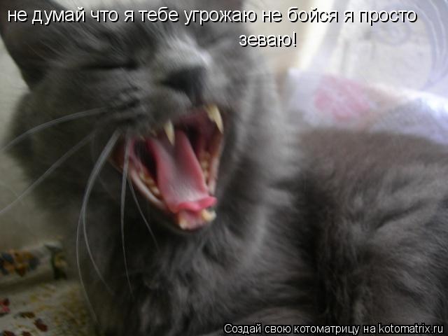 Котоматрица: не думай что я тебе угрожаю не бойся я просто   зеваю!