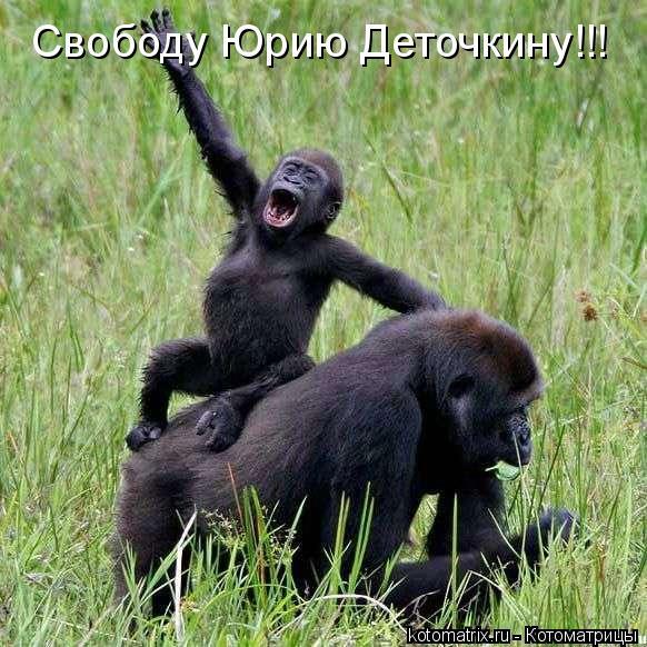 Котоматрица: Свободу Юрию Деточкину!!!