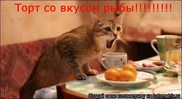 Котоматрица: Торт со вкусом рыбы!!!!!!!!!